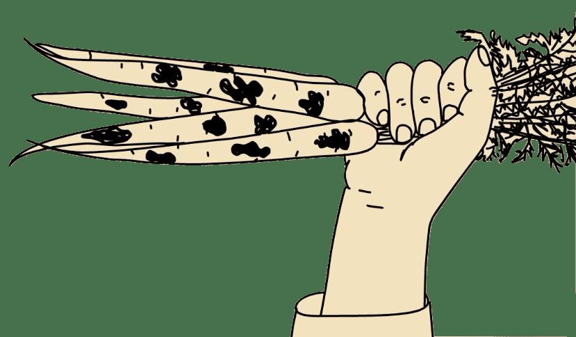 Madagaskar karikatúra porno